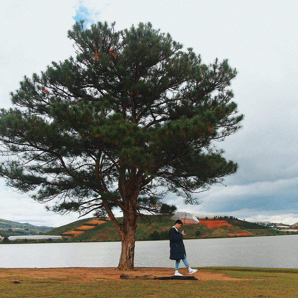 chill với cây thông cô đơn Đà Lạt