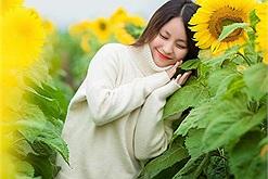 Dòng người nô nức check-in mùa hoa hướng dương đang nở vàng cả một góc trời xứ Nghệ