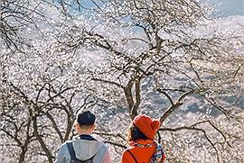 """3 mùa hoa """"bung nở đẹp nhất"""" mà dân du lịch không thể bỏ lỡ những ngày đầu năm"""
