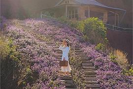 Đà Lạt đi đâu: Những bậc thang phủ đầy hoa có thể xô đổ bất cứ trái tim nào ở vườn hoa Túi thương nhớ