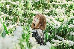 Tây Nguyên đi đâu: Ngắm mùa hoa cà phê sắp nở trắng trời đẹp như bản tình ca tuyết trắng