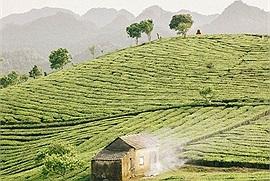 """Nơi này có """"trà xanh"""" - 7749 đồi trà xanh đẹp nhất Việt Nam"""