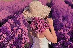 Vũng Tàu đi đâu: Check-in lia lịa ở cánh đồng hoa thạch thảo tím đẹp tựa trời Âu