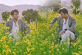 """""""Anh không là chàng thơ"""" cho đến khi dạo bước ở chốn thảo nguyên cải vàng rực rỡ này"""