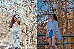Gọi tên mùa hoa bông gòn Vũng Tàu đẹp lãng mạn tựa thước phim Hàn Quốc