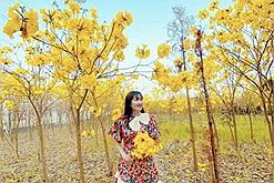 Cảnh tượng hoa chuông vàng nở rộ khắp một vùng trời ở Bắc Giang