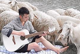 """3 đồng cừu trắng muốt đẹp tựa Châu Âu cho hội """"sống ảo"""" tha hồ """"nháy máy"""""""