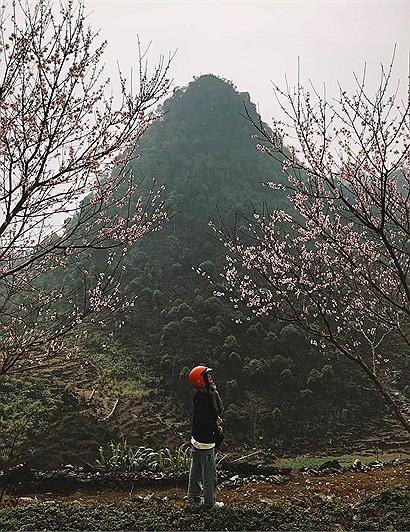"""Mùa xuân đang về trên cao nguyên đá thật rồi, lên Hà Giang để thấy """"lòng mình cũng nở hoa"""" thôi!"""