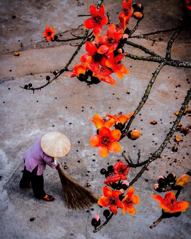 mùa hoa mộc miên