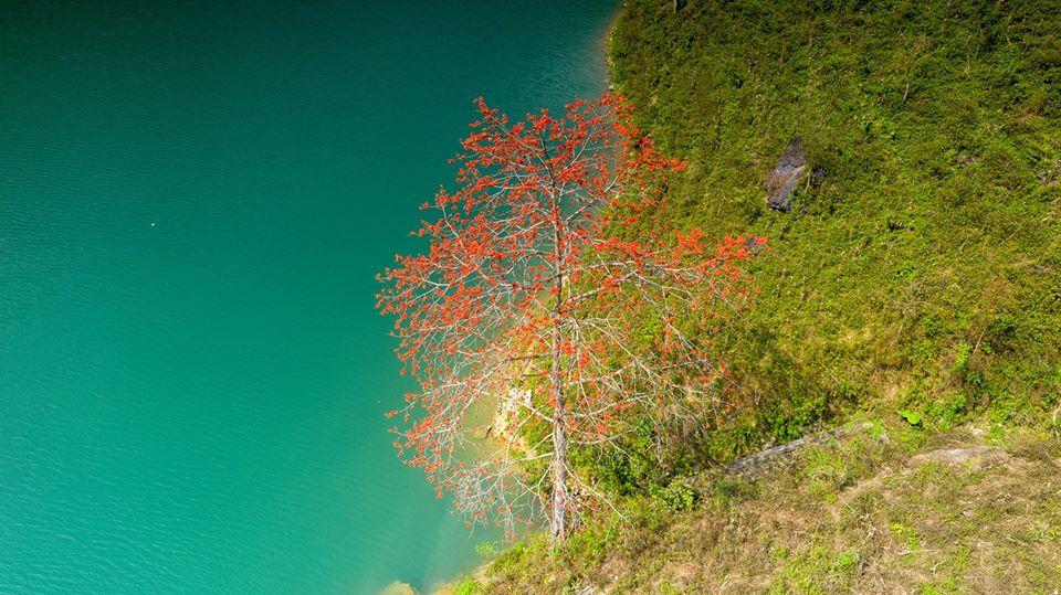 Mùa hoa gạo ở cao nguyên đá Hà Giang