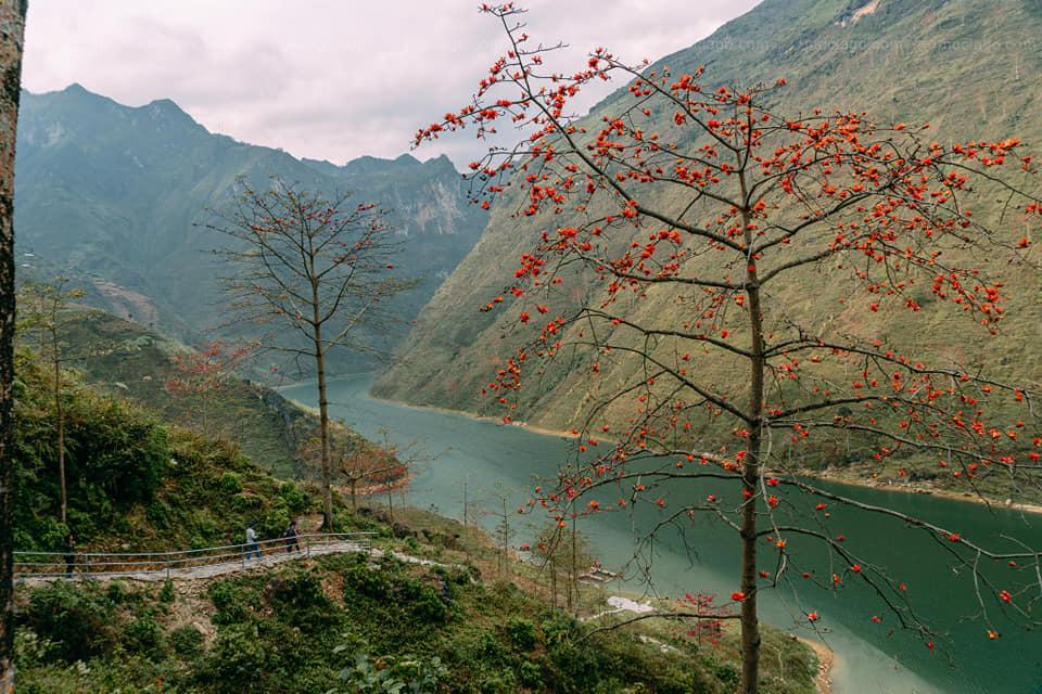 mùa hoa gạo Hà Giang