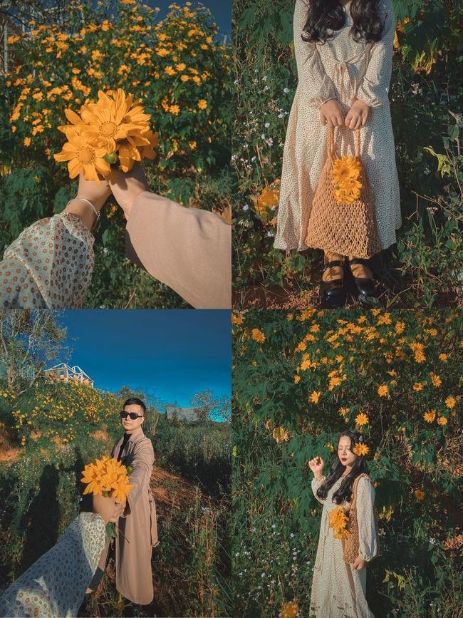Chụp ảnh hoa dã quỳ tại Đà Lạt
