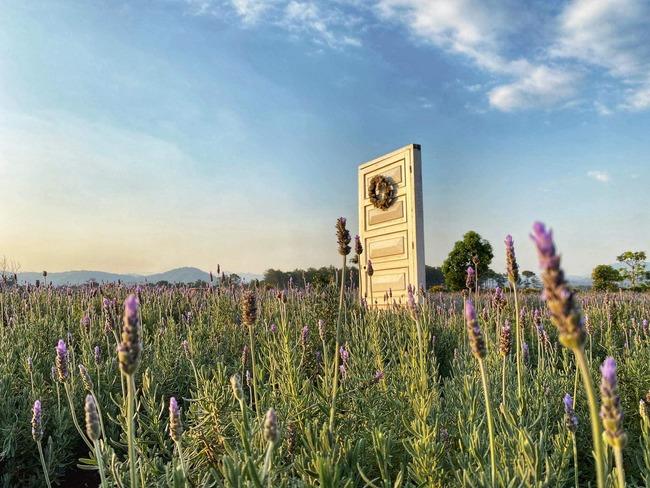 Cánh cửa thời gian ở vườn hoa lavender đà lạt