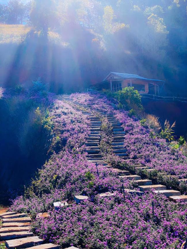lavender túi thương nhớ đà lạt