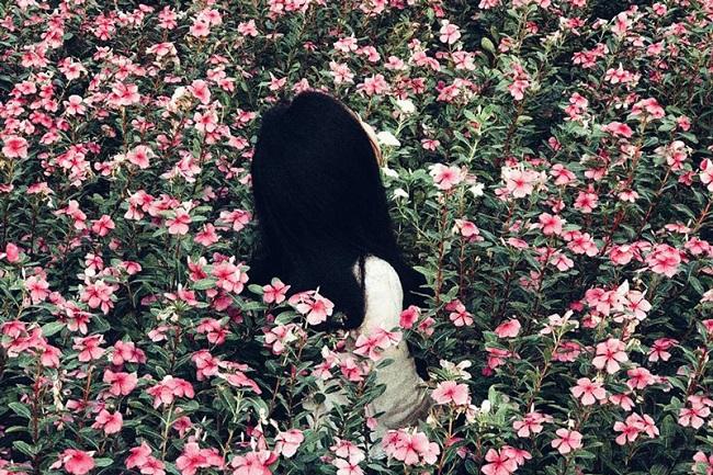 Check in cánh đồng hoa dừa cạn rực rỡ