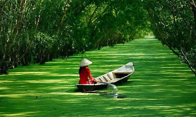 Rừng tràm Trà Sư xanh mướt nổi danh đất An Giang