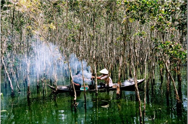 rừng ngập mặn cà mau