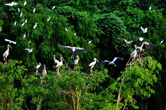 vườn chim