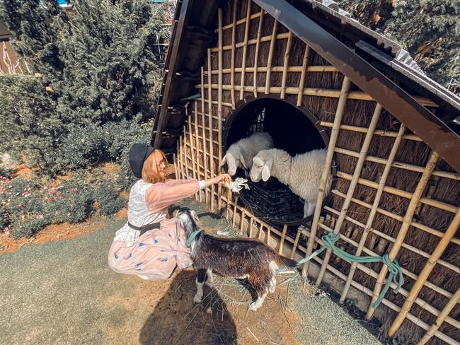 trải nghệm chăn dê ở đà lạt