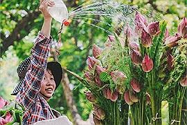 Đừng vội ghét mùa hè bởi tháng 5 này, Hà Nội còn có 4 mùa hoa đẹp tới nao lòng này