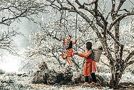 Một thoáng Mộc Châu: khi bốn mùa chạm ngõ và thảo nguyên bừng sắc hoa