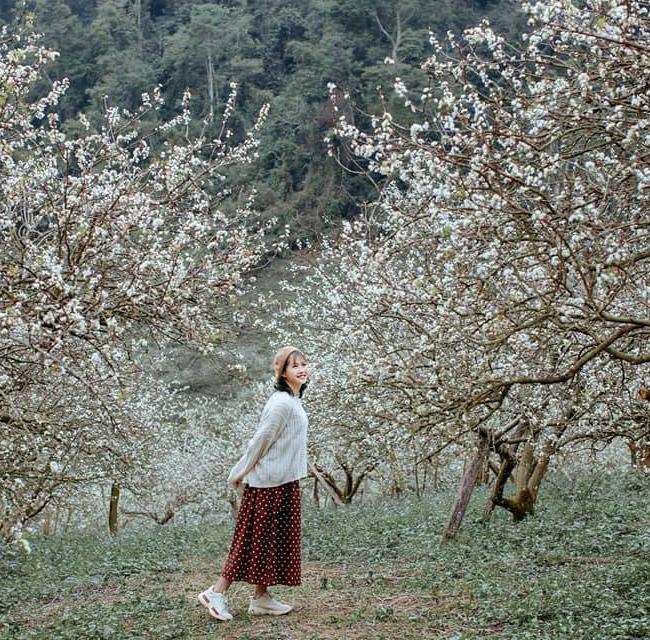 Mộc Châu mùa hoa mận