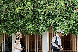 """2 tài khoản Instagram nổi tiếng Sài Gòn """"đại chiến"""" trên mạng xã hội, tất cả chỉ vì một cái cây!"""