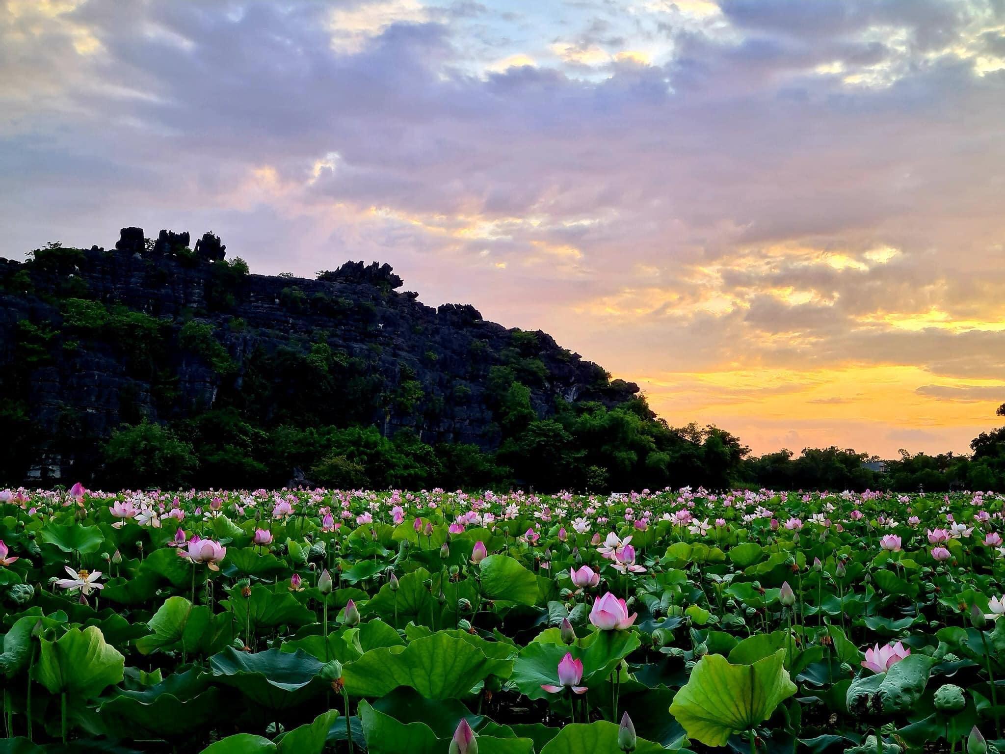 những đầm sen đẹp ở Việt Nam