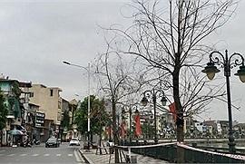 Hải Phòng: Hàng chục cây xanh trên vỉa hè dự án nghìn tỷ chết bất thường. Có phải du lịch Hải Phòng đang bị ảnh hưởng?