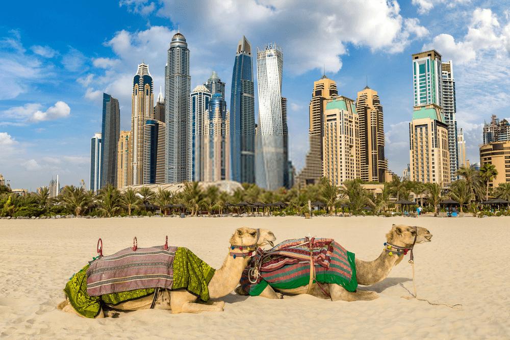 Thỉnh thoảng cũng chơi lạc đà trên bãi biển