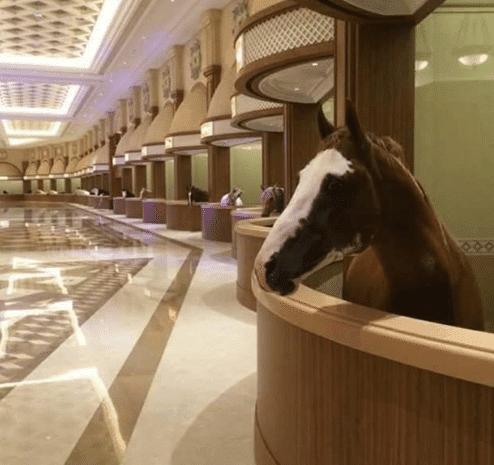 Ngay cả những con ngựa ở Dubai cũng được ở trong chuồng với sàn lát đá cẩm thạch xa xỉ