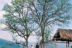 """Tạp chí Forbes """"xướng tên"""" Lào Cai trong top 5 kỳ quan thiên nhiên của Đông Nam Á"""