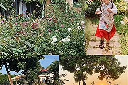 Mùa dịch thì làm gì: Cặp bố mẹ trẻ làm ngay một ngôi nhà hoa hồng tặng con gái