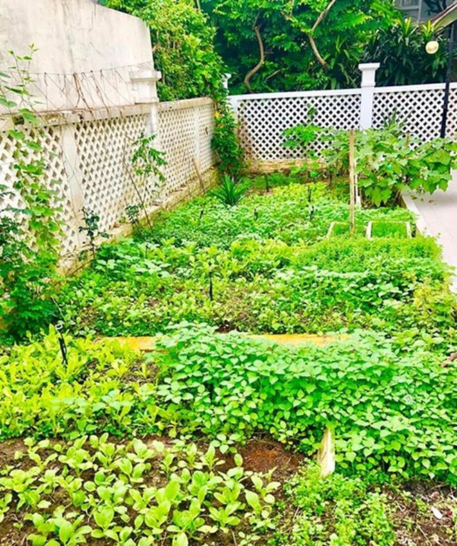 vườn cây nhỏ của Thủy Tiên