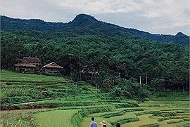 Ẩm thực đầy mê hoặc của người dân tộc Thái tại Pù Luông, Thanh Hóa