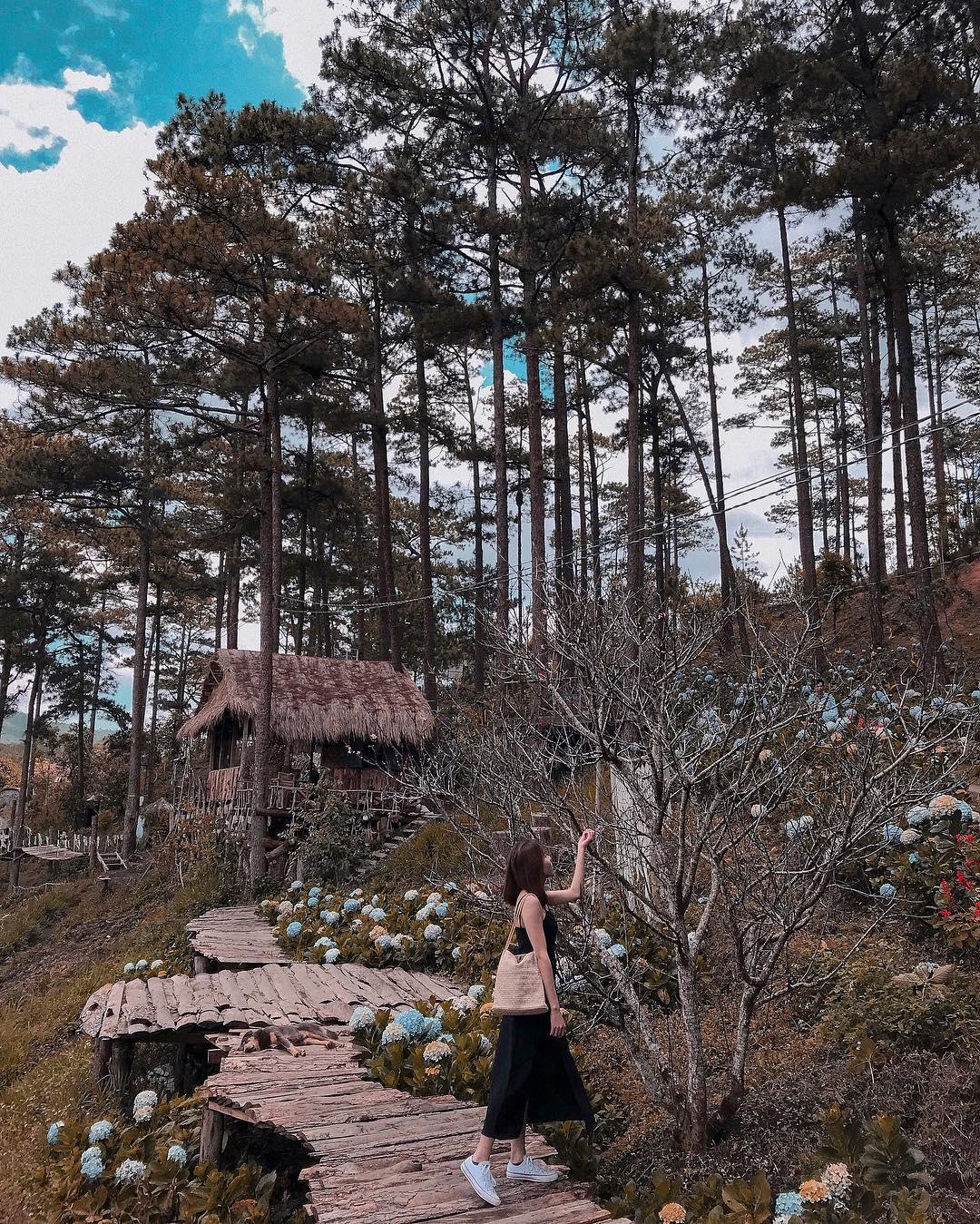 4 rừng thông cứ lên hình là đẹp mê mẩn ở Đà Lạt