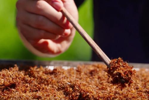 Muối kiến vàng, món ăn nhất định phải thử nếu có dịp tới Phú Yên