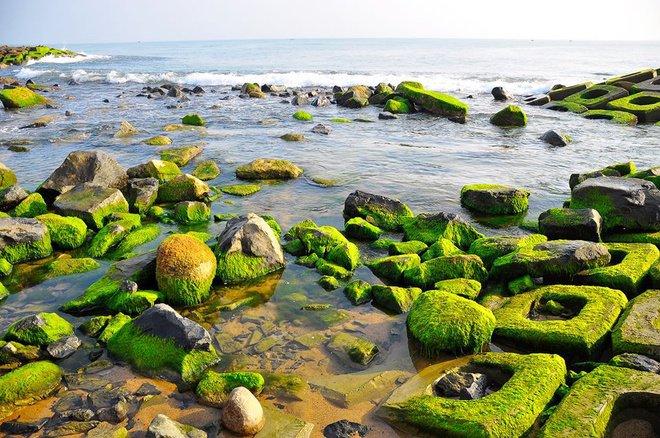 Nức lòng với du khách trong thiên đường của rêu xanh