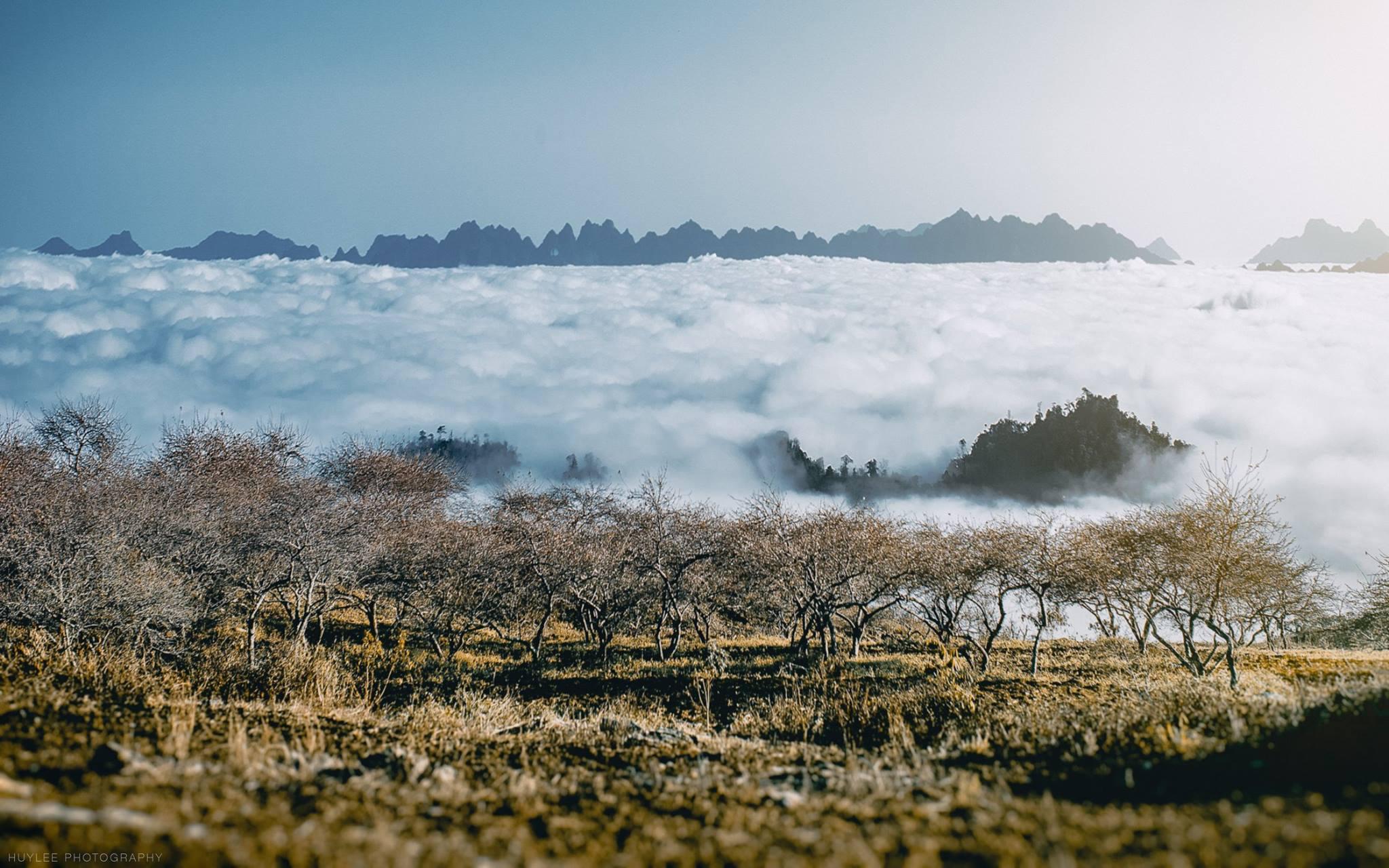 Mộc Châu trong 1 ngày sương phủ trắng xóa