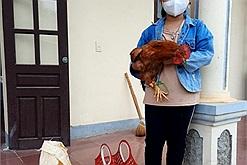 Xúc động hình ảnh bé gái tiểu học ôm gà đi ủng hộ chống dịch Covid-19