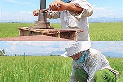 Cả làng bị phong tỏa hơn 240 ha lúa được chăm sóc bởi người đàn ông bình thường nhưng lại thật phi thường này