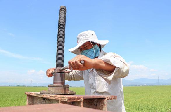 Cả làng bị cách ly, người đàn ông duy nhất chăm sóc 240 ha lúa