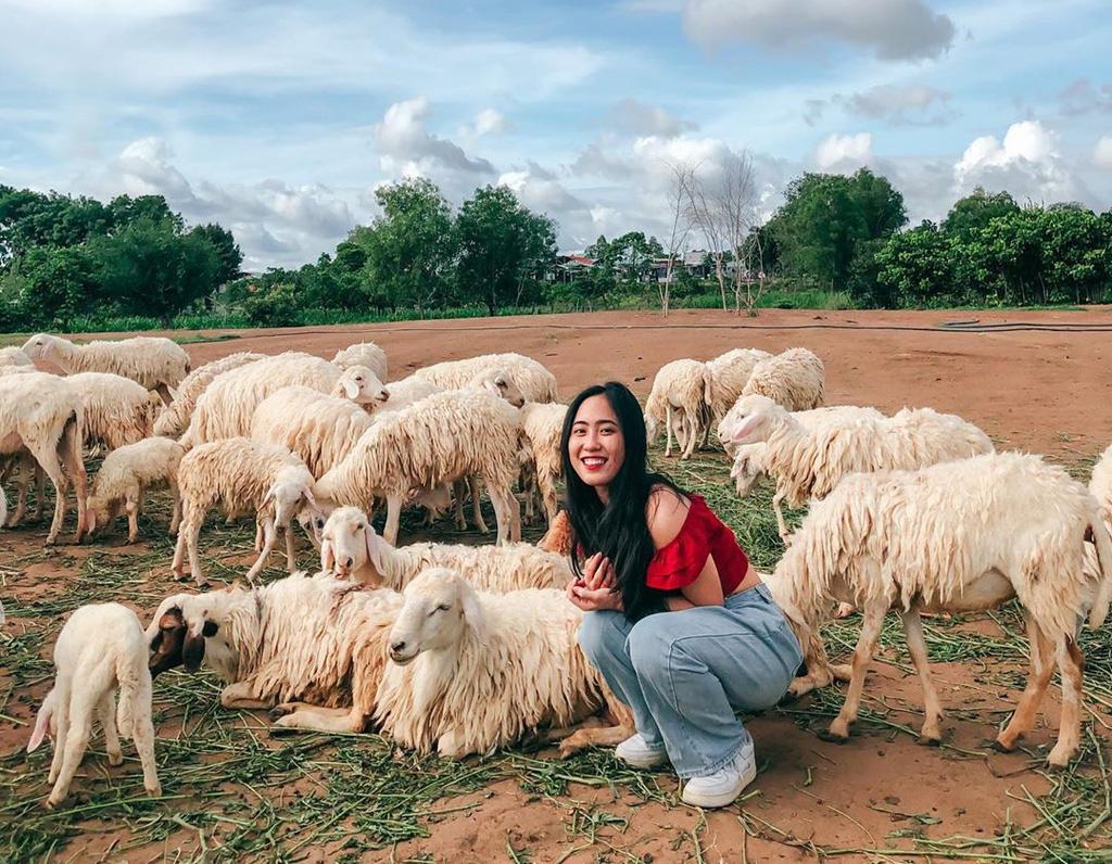 trang trại cừu