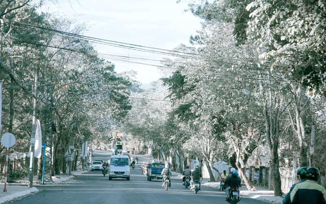 con đường hoa
