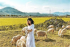 Quẩy hết mình với đồng cừu Suối Nghệ, địa điểm MUST CHECK IN sát xịt Sài Gòn