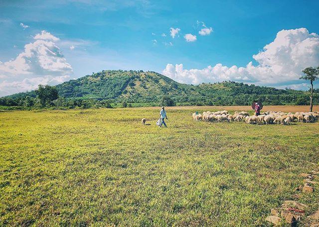 Đồng cừu Suối Nghệ - địa điểm chụp hình cực hot tại Vũng Tàu