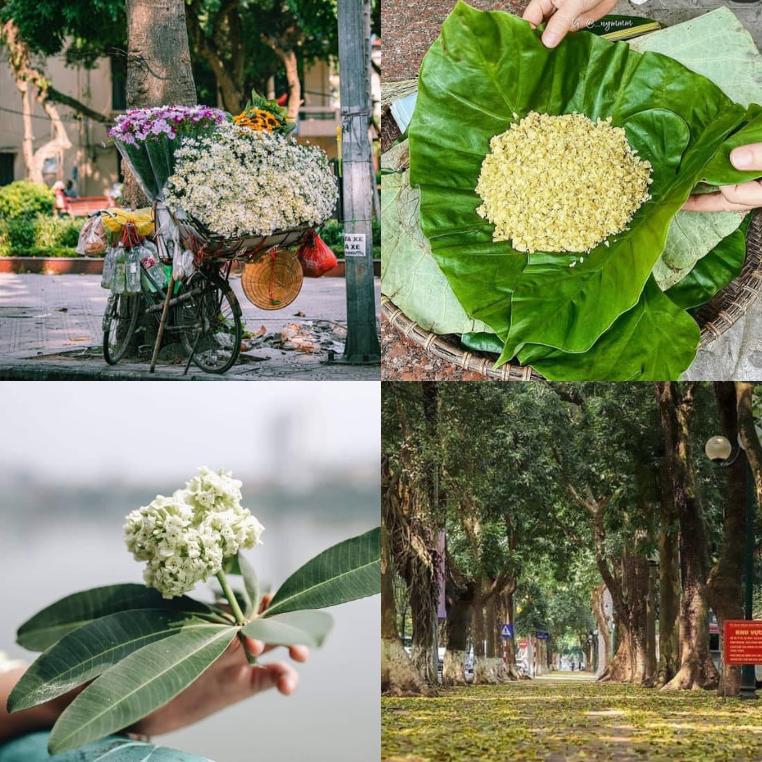 Ngày dịch, Hà Nội vào thu - có ai thương nhớ những vẻ đẹp?