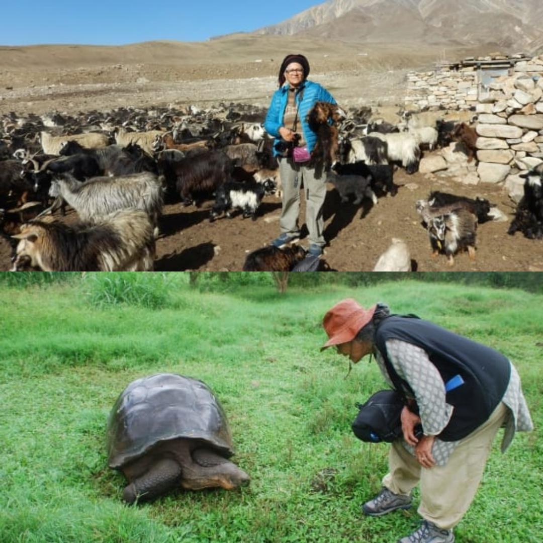 """Hành trình một mình """"đi khắp thế gian"""" của người phụ nữ 70 tuổi: đi để vượt qua tuổi tác và bệnh tật"""
