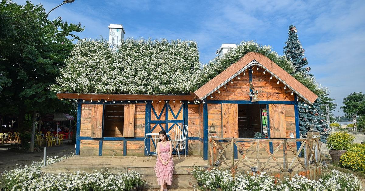 Căn nhà cúc họa mi tại bãi đá sông Hồng khiến du khách cứ