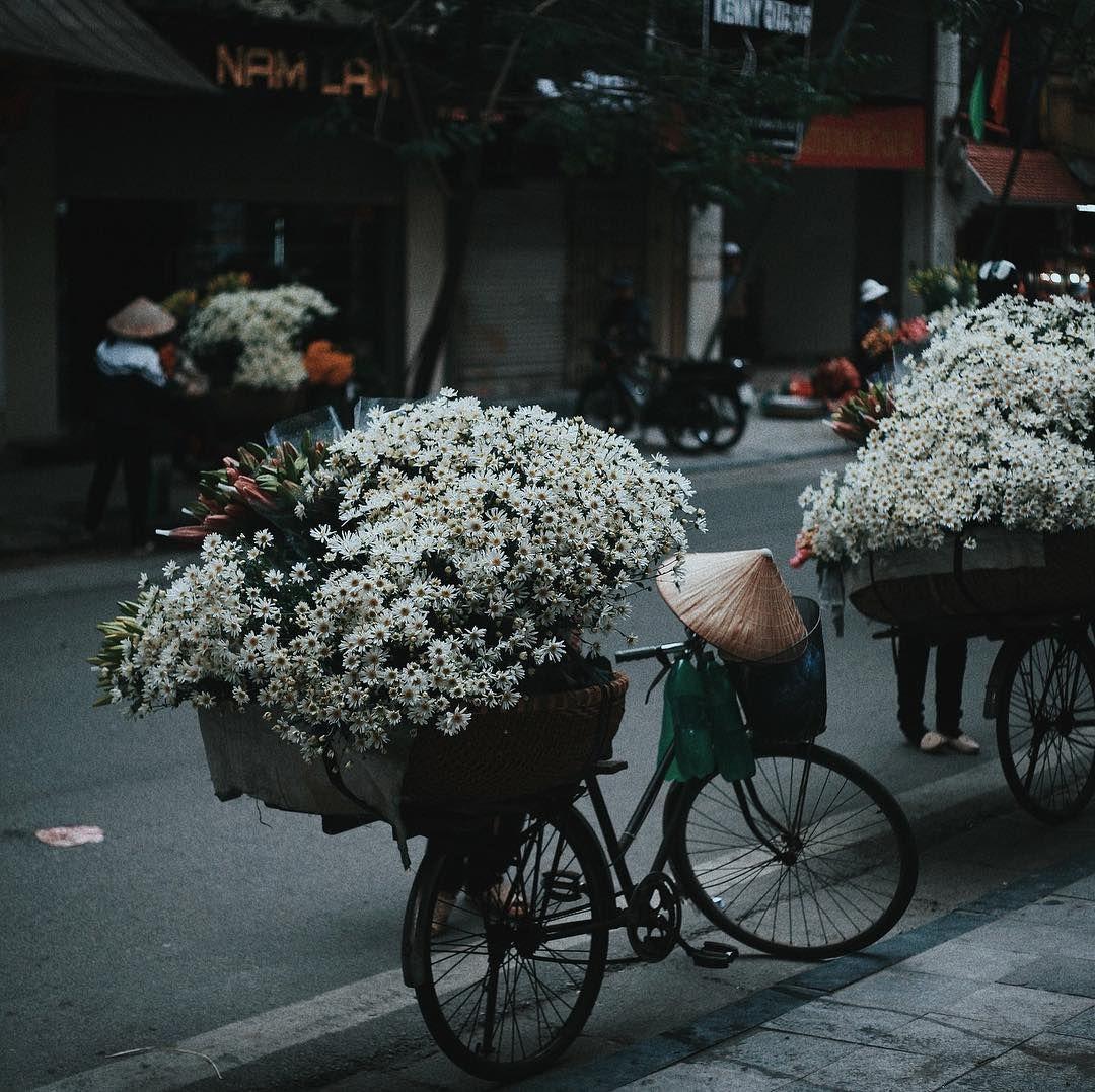 gánh hàng hoa cúc họa mi Hà Nội